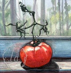 'Mater tomato on a windowsill