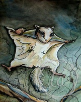 flying squirrel leaping through the night