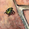 june bug on brick