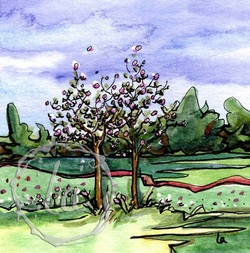 Buds, spring red bud trees watercolor