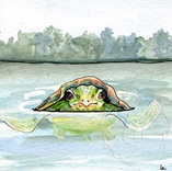 Going for a Swim, a turtle swims in a summer lake