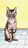 daisy duke cat portrait tabby eyes blue yellow