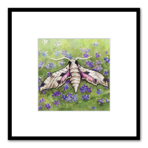 Sphinx moth - achemon sphinx moth and phlox flowers by Leslie Allyn
