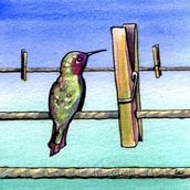 hummingbird and clothespin