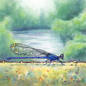 Down by the River blue Damselfly by Leslie Allyn